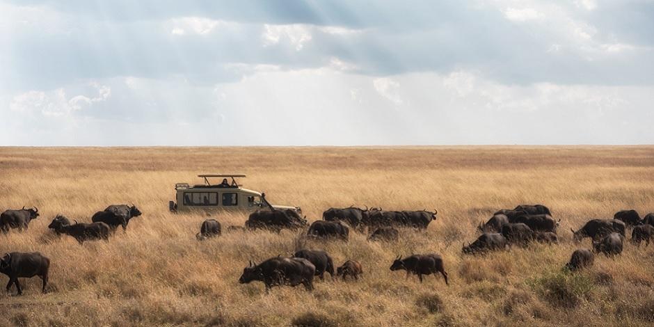 En plein safari