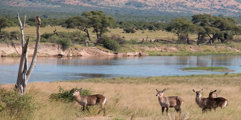 Parc National De Ruaha