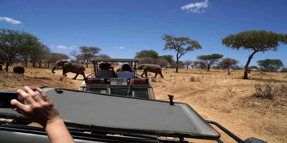 Safari Dans Le Parc Tarangire