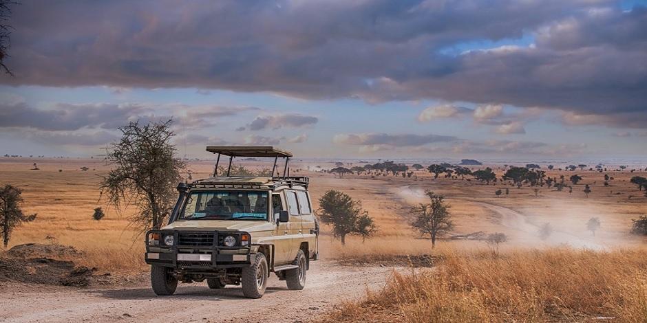 Safari En Tanzanie Dans Le Parc Serengti