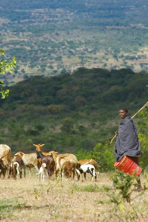Combine Tanzanie/Kenya