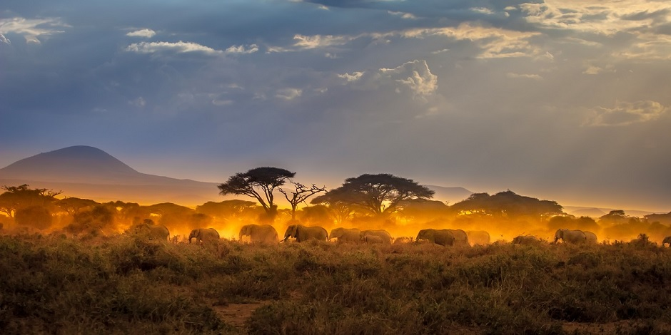Les habitants du Parc National Amboseli