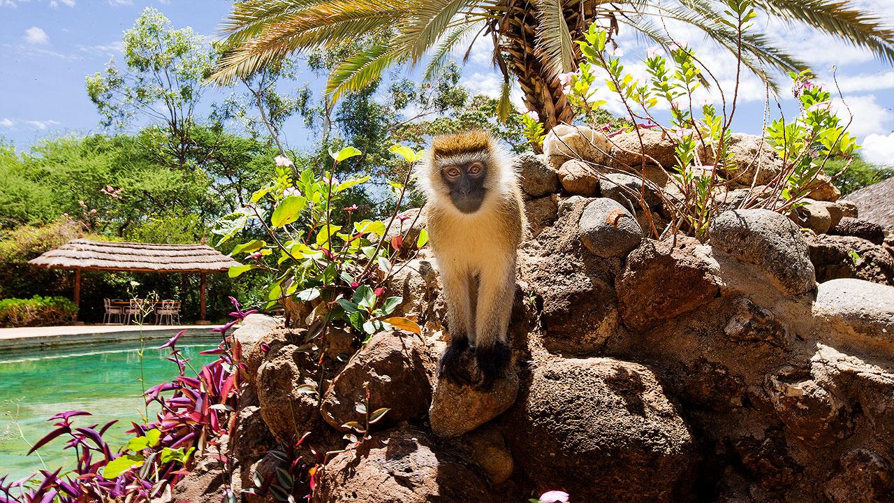 Sopa Lodge à Amboseli